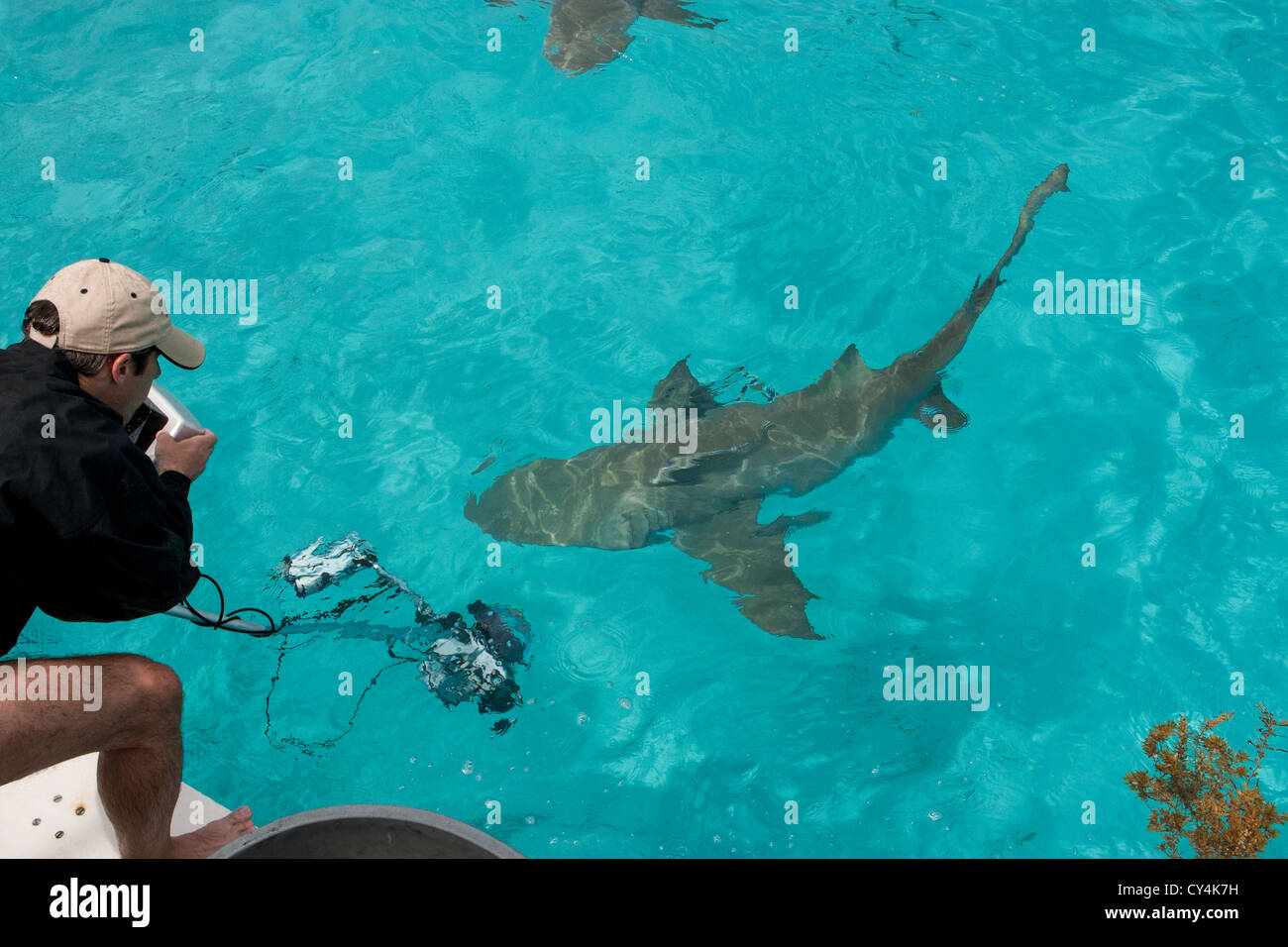 Photographer uses polecam to capture images of sharks - Stock Image
