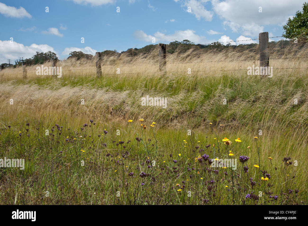 Rural scene, fence and grass blowing wind. - Stock Image