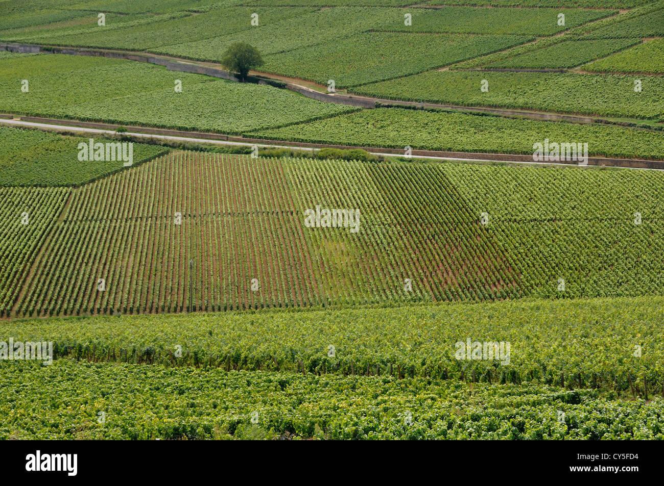 Cotes de Beaune vineyard, Cote d'Or, France, Europe - Stock Image