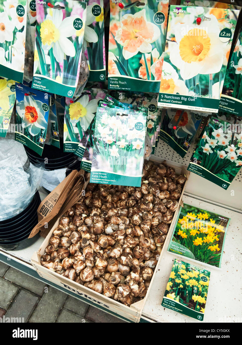 Packaged daffodil and narcissus flower bulbs for sale in autumn in a packaged daffodil and narcissus flower bulbs for sale in autumn in a garden centre planted in autumn they flower in spring mightylinksfo