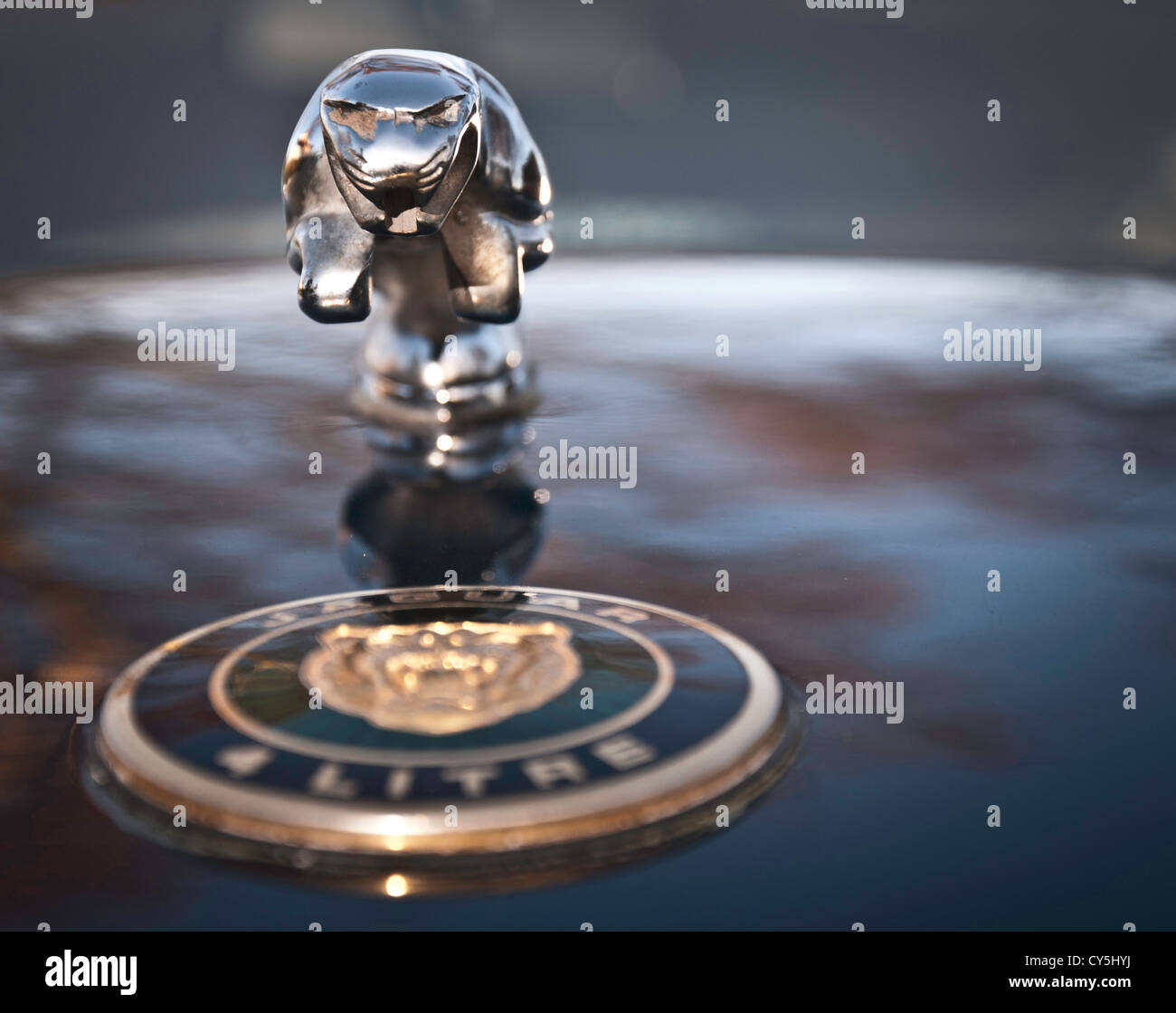 Jaguar Car Mascot Stock Photos Jaguar Car Mascot Stock Images Alamy