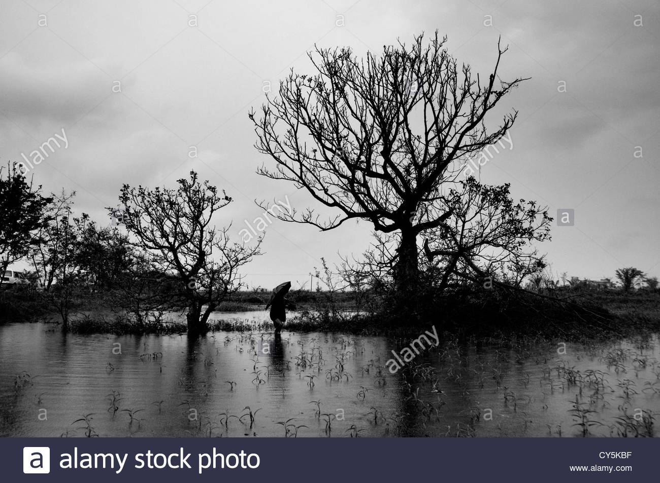 A woman walking in a flooded rural area near Yangon in the Republic of the Union of Myanmar or Burma - Stock Image