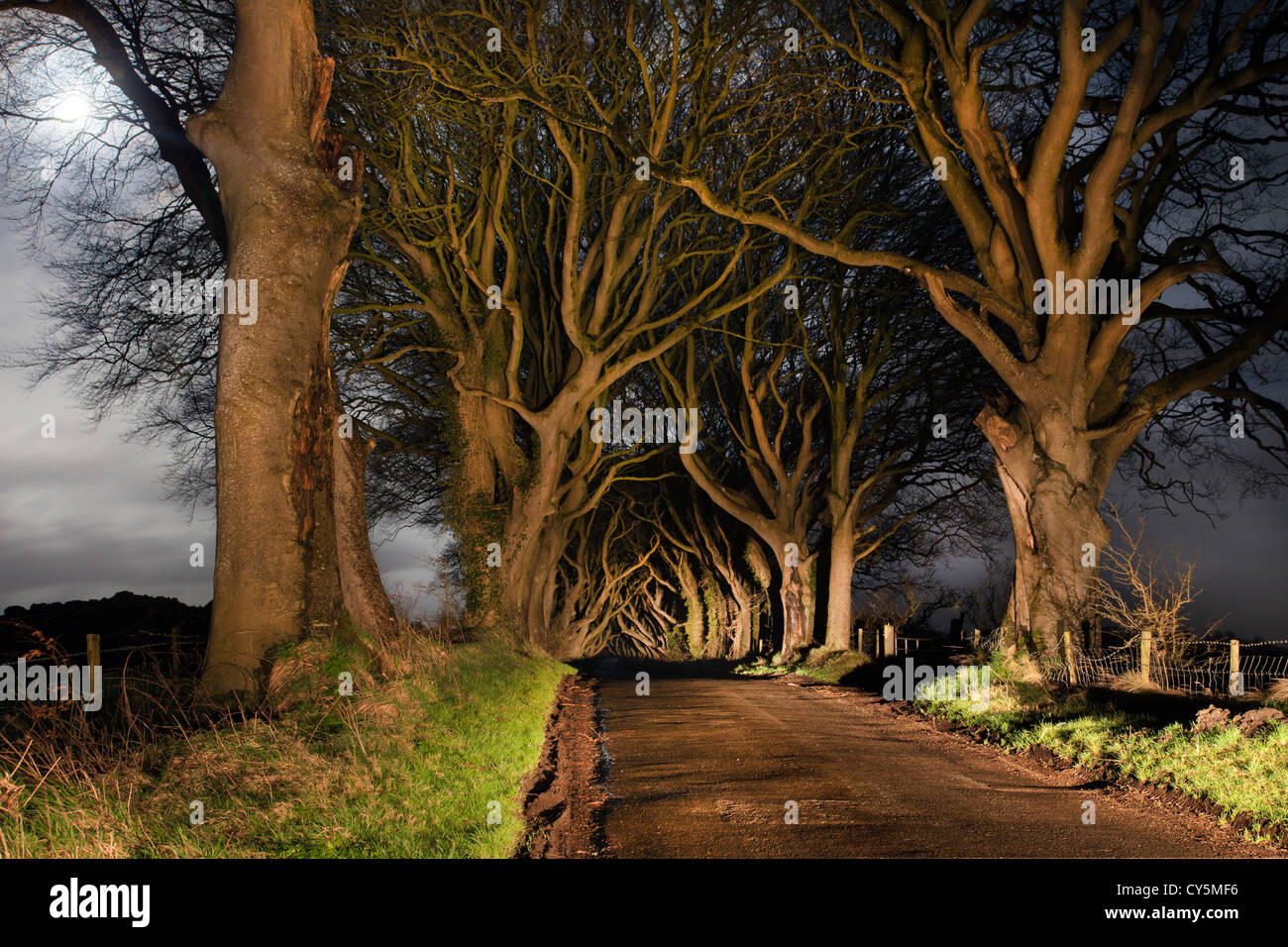 Dark hedges at night, full moon to left - Stock Image
