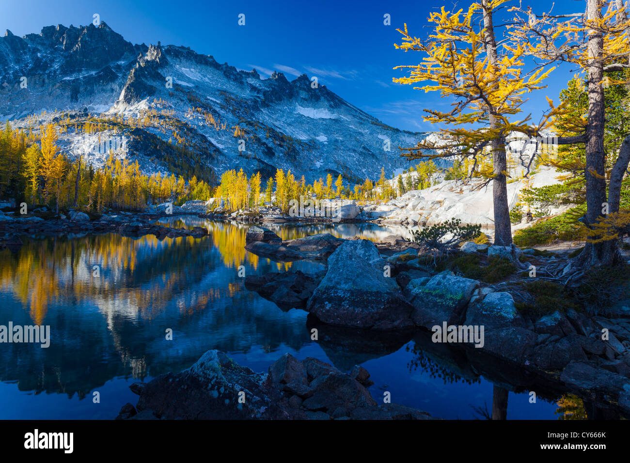 Tamaracks reflecting in Lake Leprechaun in Washington's Enchantment Lakes wilderness area - Stock Image