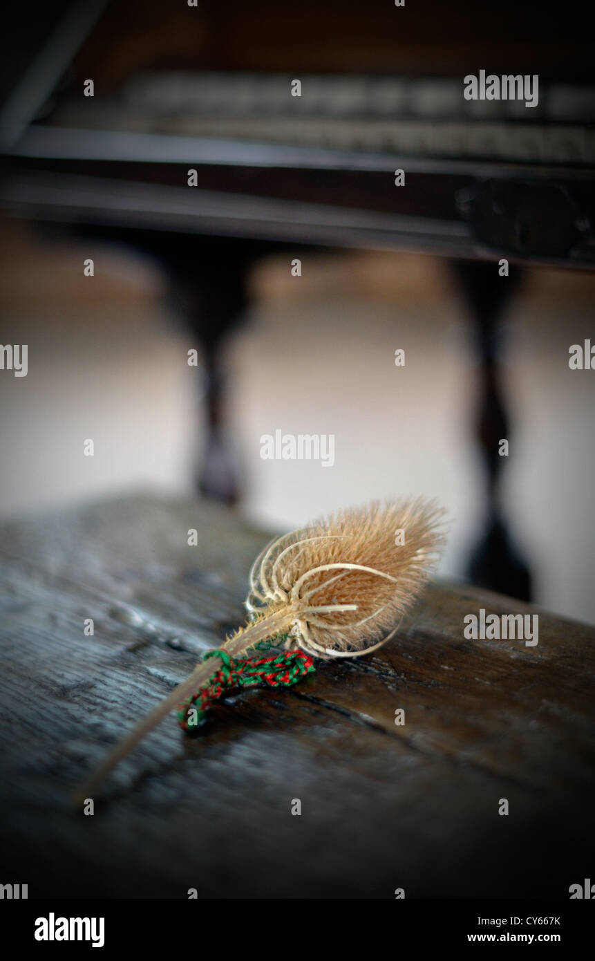 teasel on old wooden chest piano in background - Stock Image