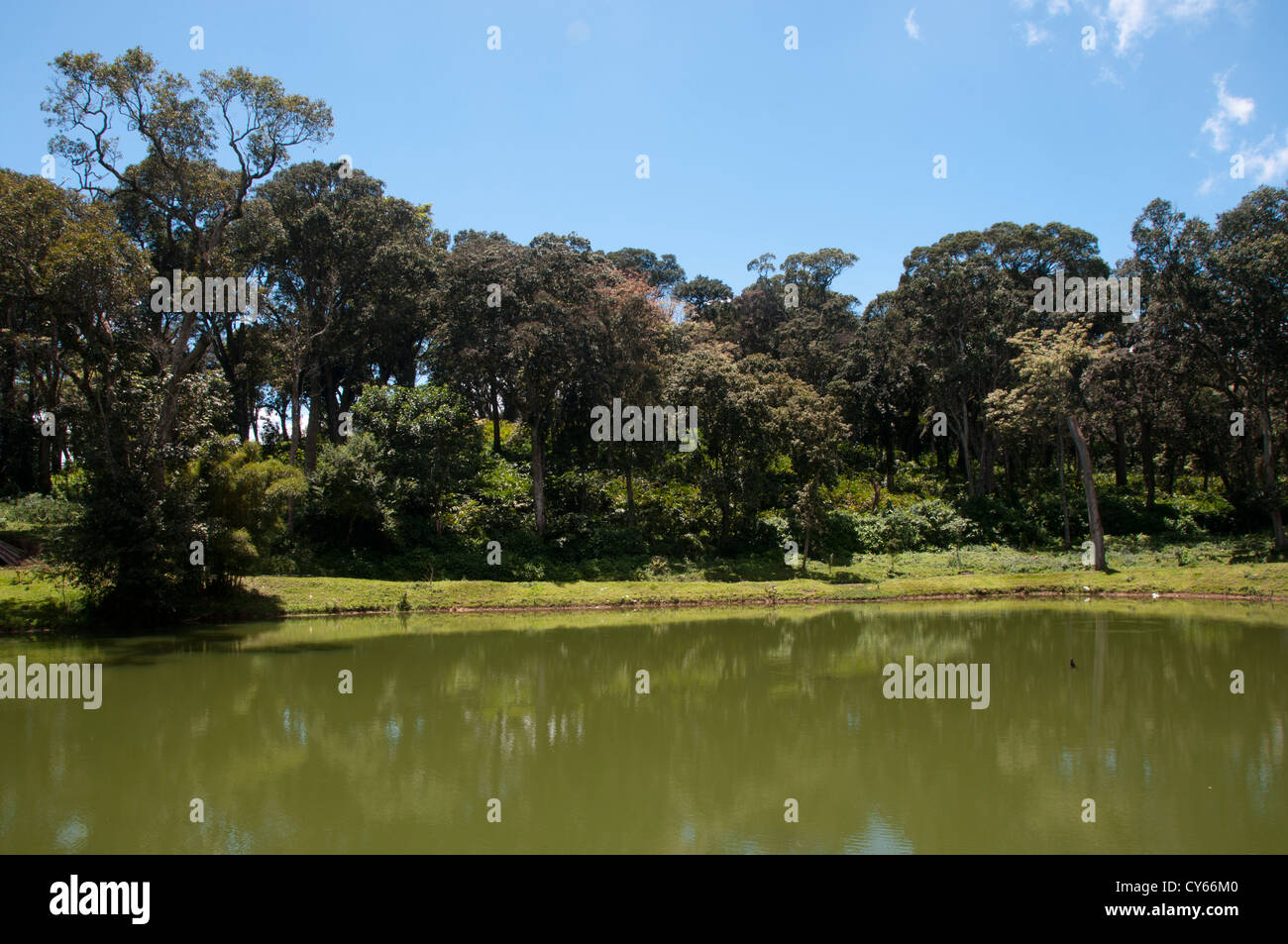 Lake in periyar tiger reserve Kerala - Stock Image