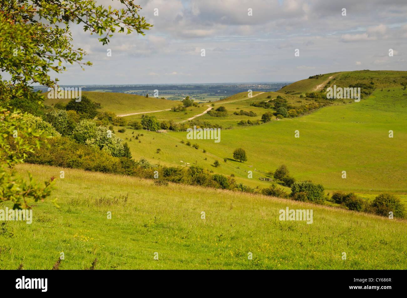 A view of Ivinghoe Beacon in Buckinghamshire. june. - Stock Image