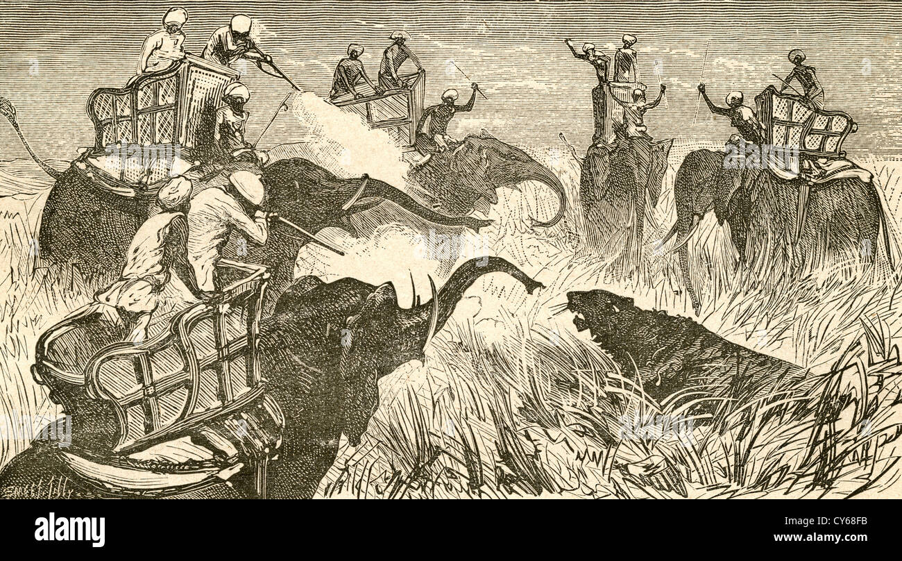 Hunters mounted on elephants, during a tiger hunt in India in the 19th century. - Stock Image