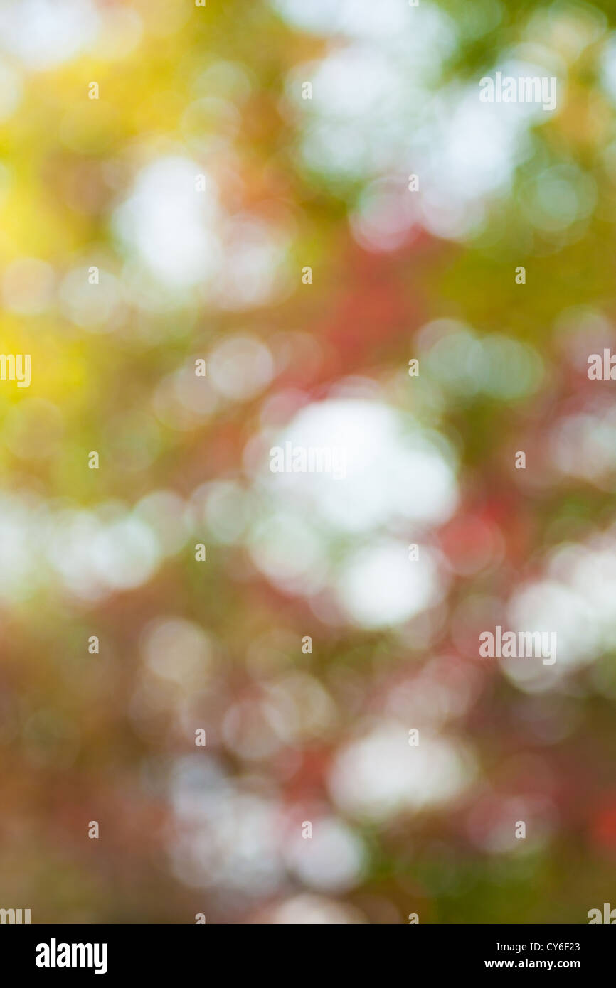 Soft, blurry, photographed bokeh background from nature - Stock Image