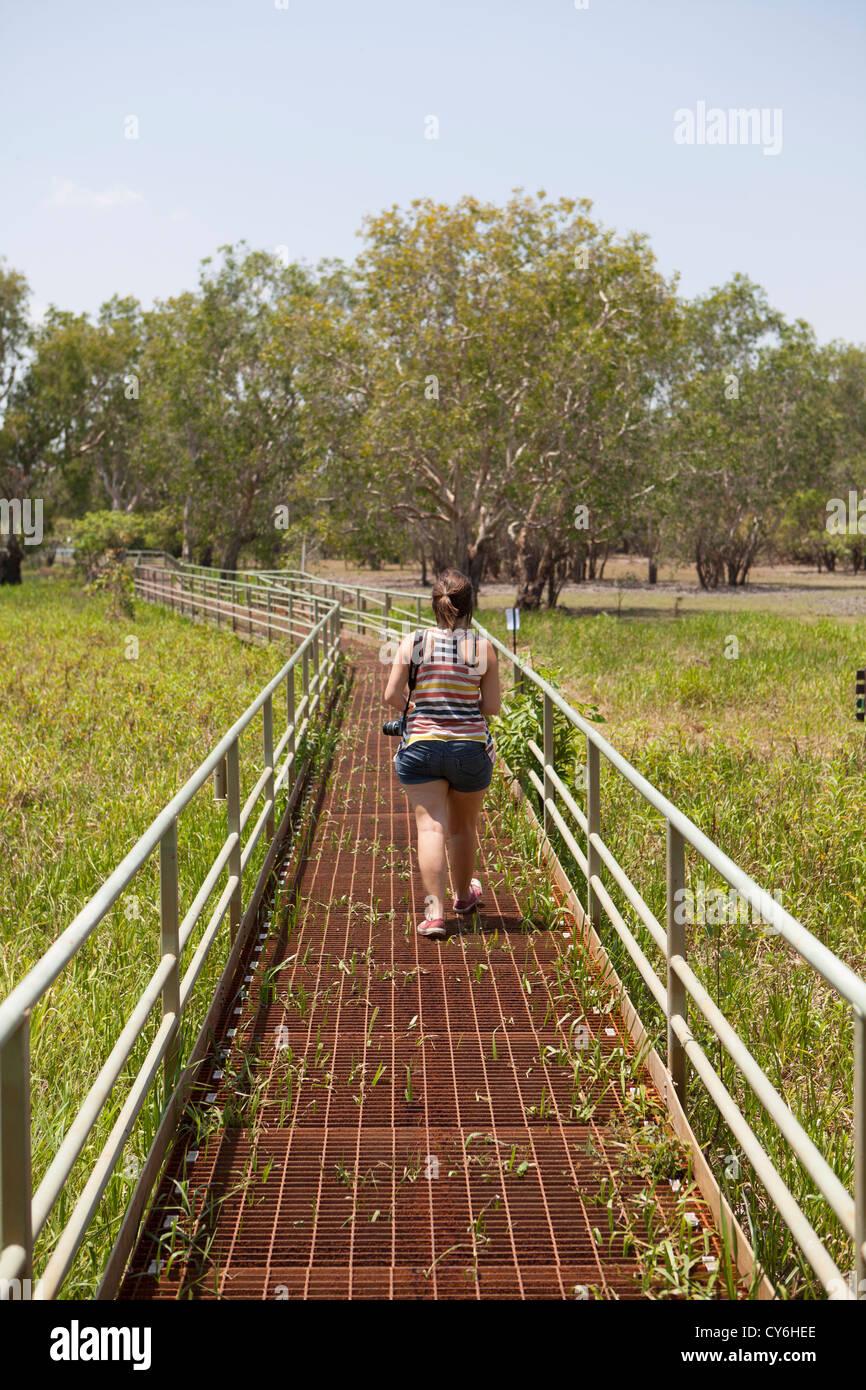 Marshland Area of Litchfield National Park, Northern Territory, Australia - Stock Image