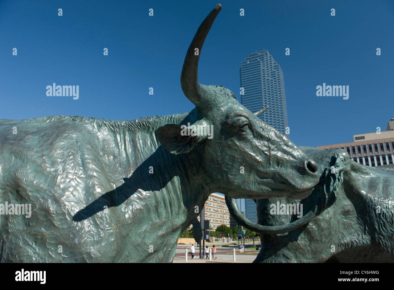TEXAS LONGHORN SHAWNEE TRAIL CATTLE DRIVE SCULPTURE (©ROBERT SUMMERS 1994) PIONEER PLAZA DOWNTOWN DALLAS TEXAS - Stock Image