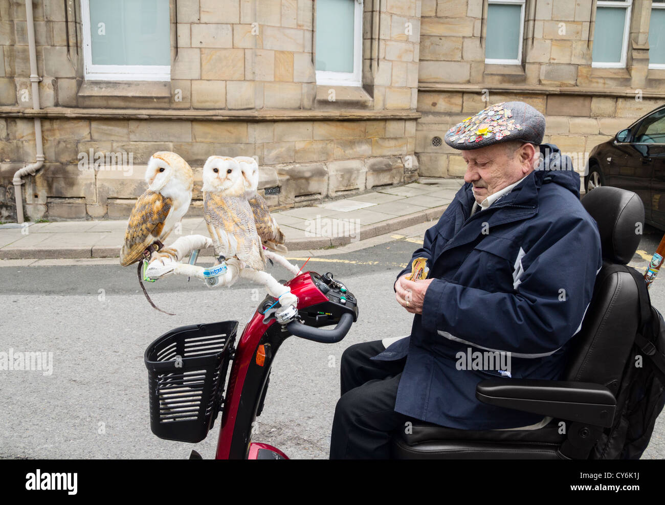 Pensioner taking his pet Barn Owls for a spin on his mobilty scooter. UK - Stock Image