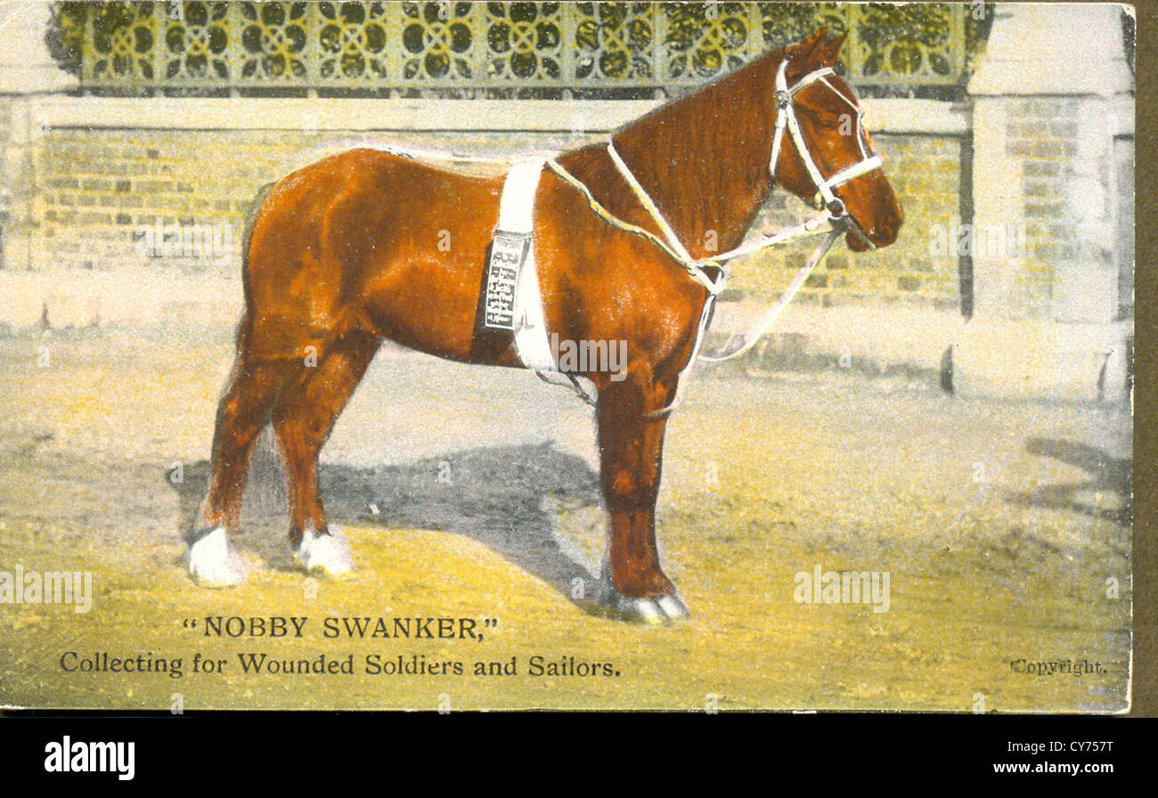 Postcard of Nobby Swanker a pony collecting for Wounded Soldiers and Sailors - Stock Image