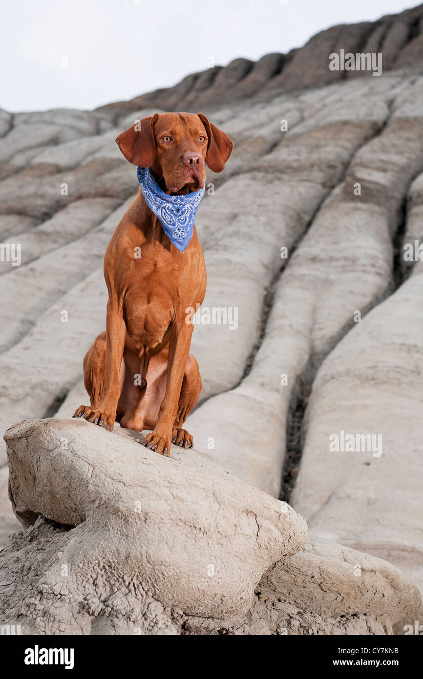 obedient dog sitting on cliff in badlands - Stock Image