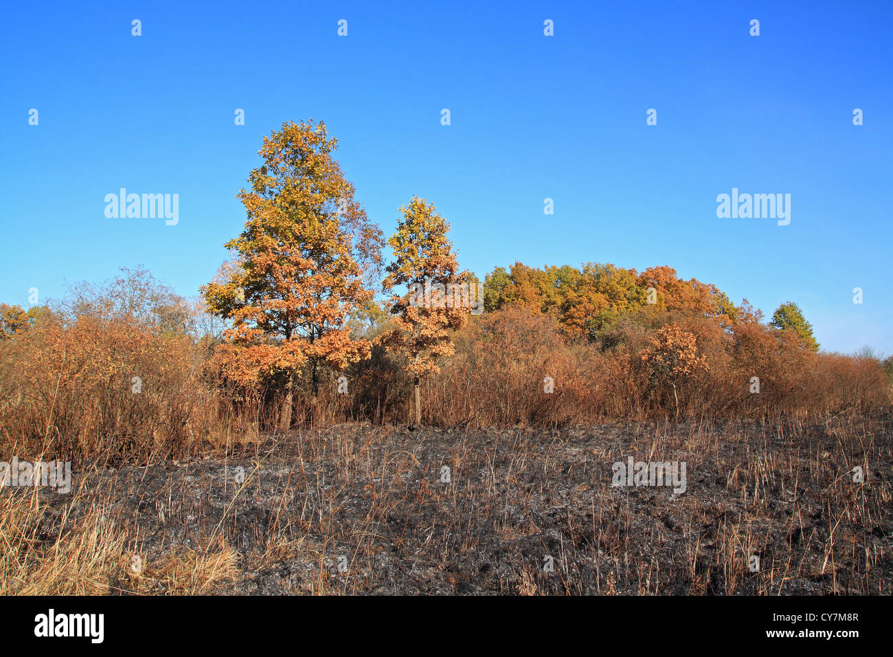 oak wood after strong fire - Stock Image