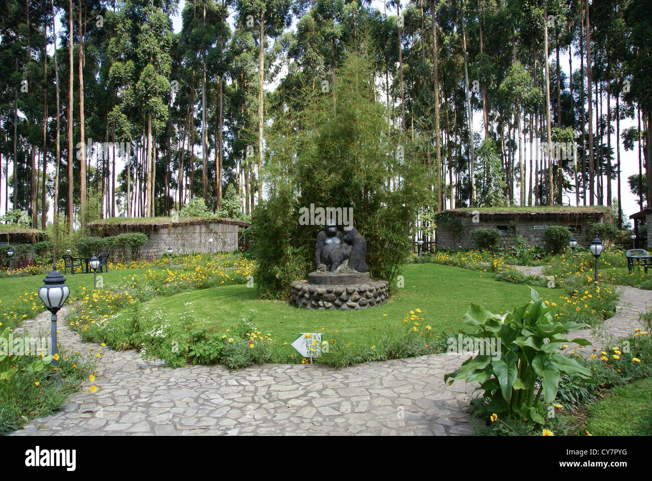 Rwanda, Volcanoes National Park (Parc National des Volcans) Gorilla Nest Lodge - Stock Image