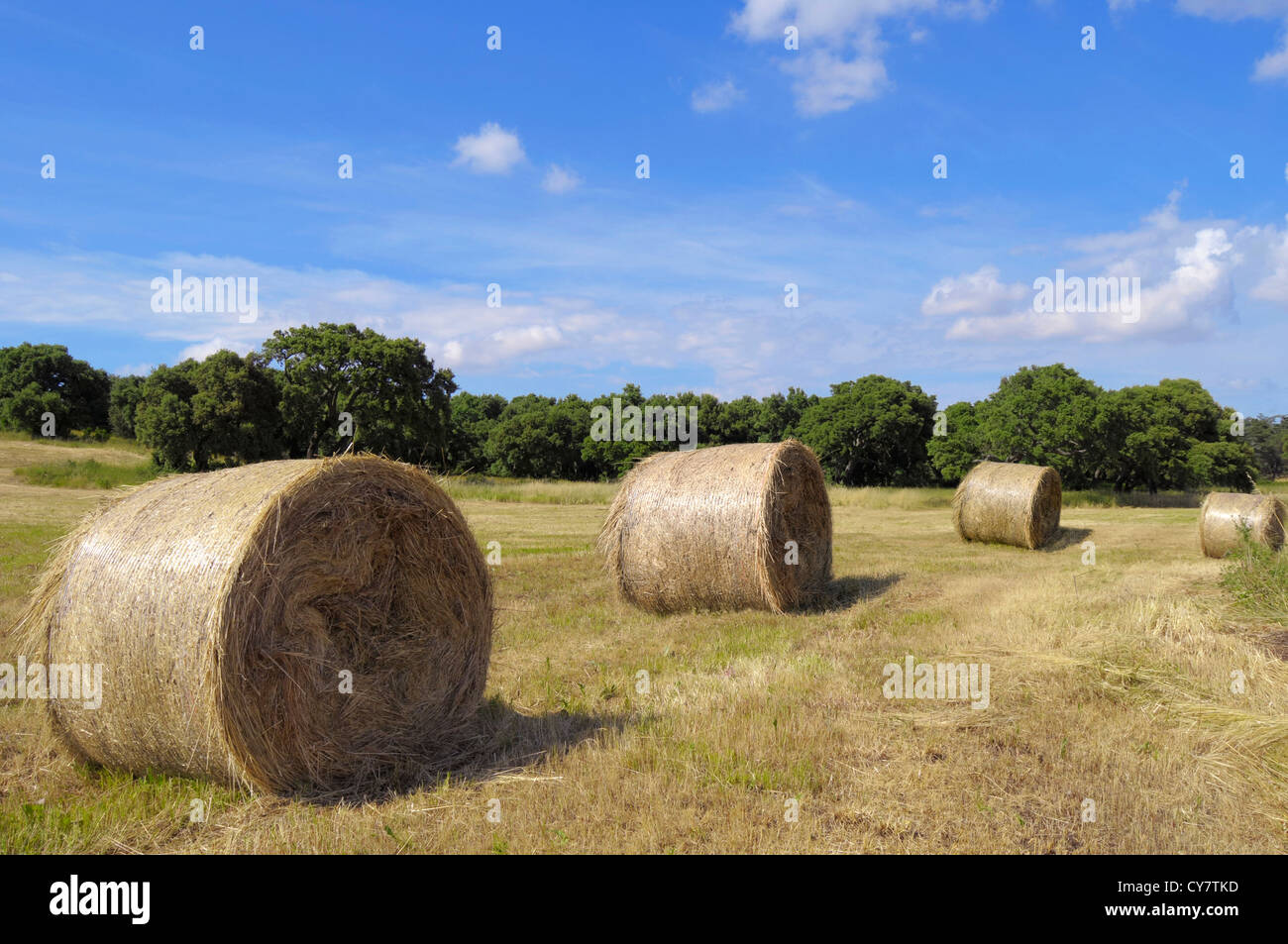Freshly cut field with hay bails - Stock Image