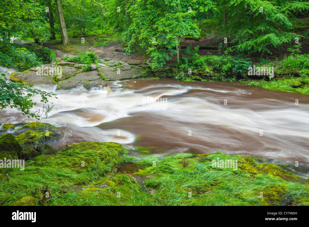 The river Wharf in spate at the Strid gorge near Bolton Abbey, North Yorkshire. - Stock Image