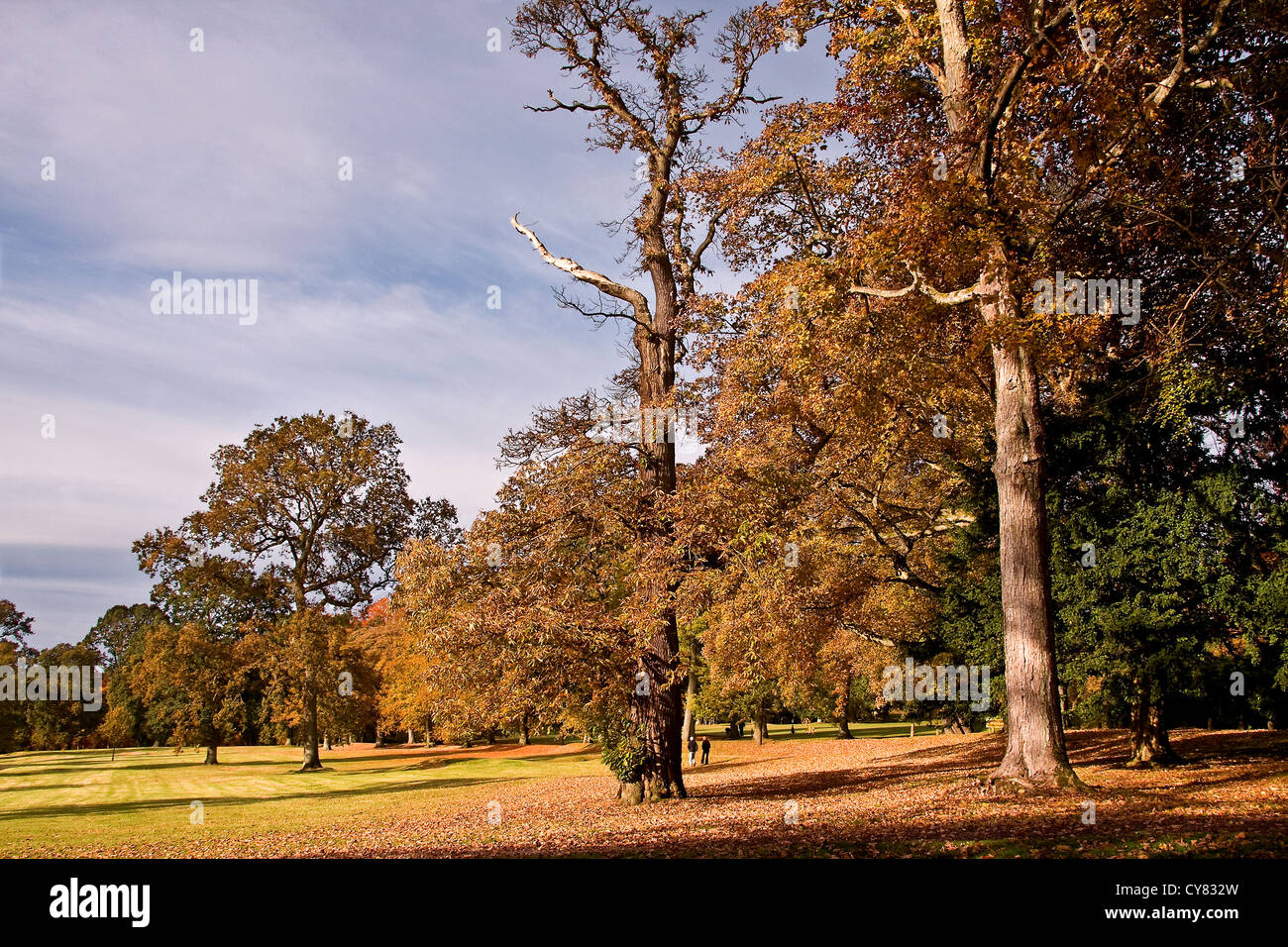 People enjoying a walk and playing golf in the Autumn sunshine at the Camperdown Country Park in Dundee,UK Stock Photo