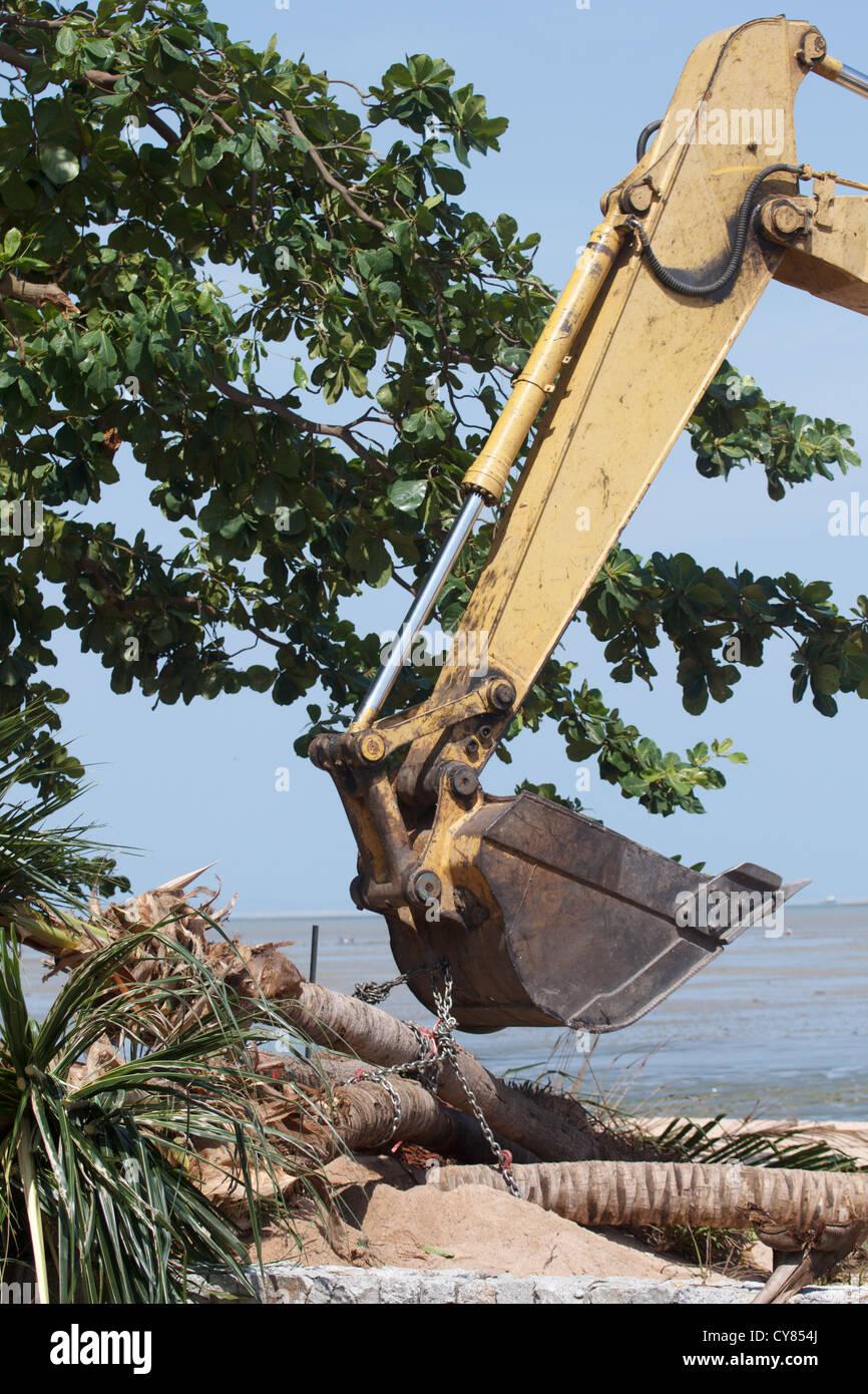 Excavators, soil and plants. - Stock Image