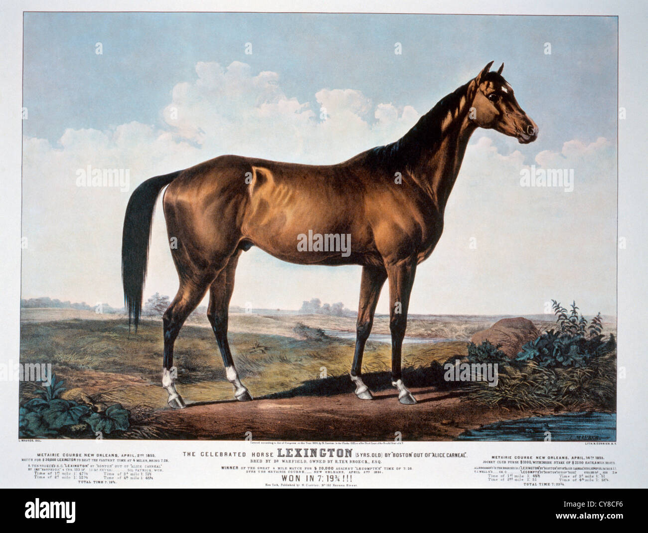The Celebrated Horse, Lexington, Currier & Ives, 1855 - Stock Image