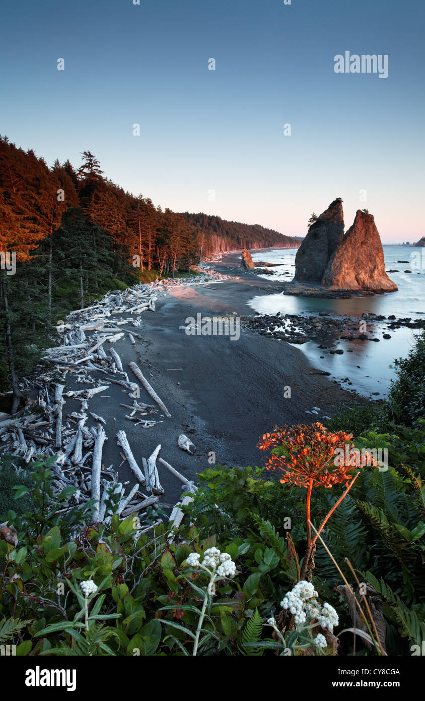 Sea stack at sunset, Rialto Beach, Olympic National Park, Washington State, USA - Stock Image