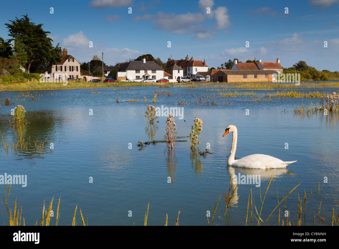 Pagham Harbour; Sidlesham Quay; West Sussex; UK; high tide; swan - Stock Image