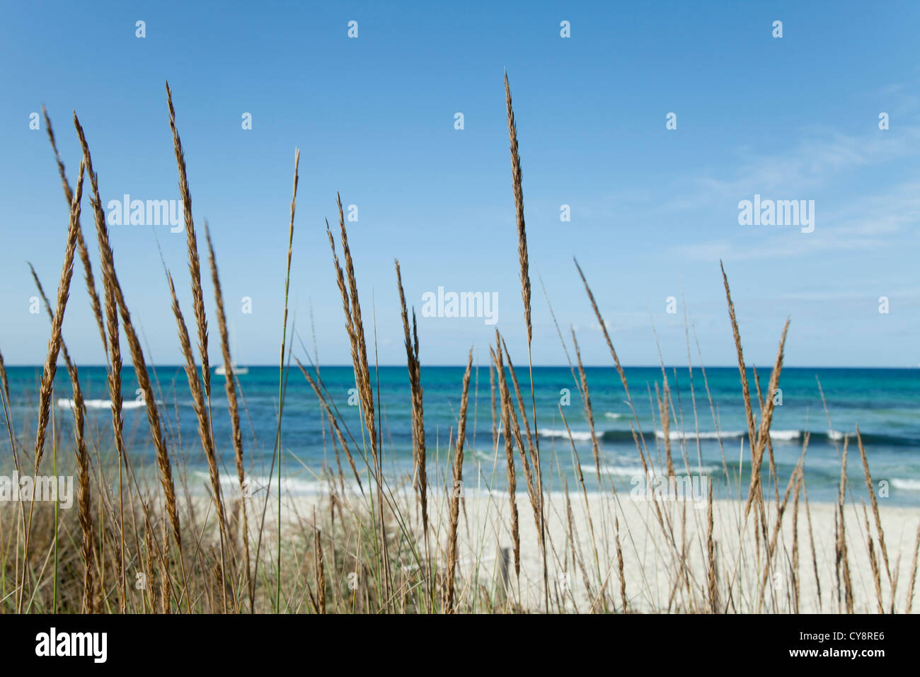 Tranquil beach scene with dune grass in foreground - Stock Image