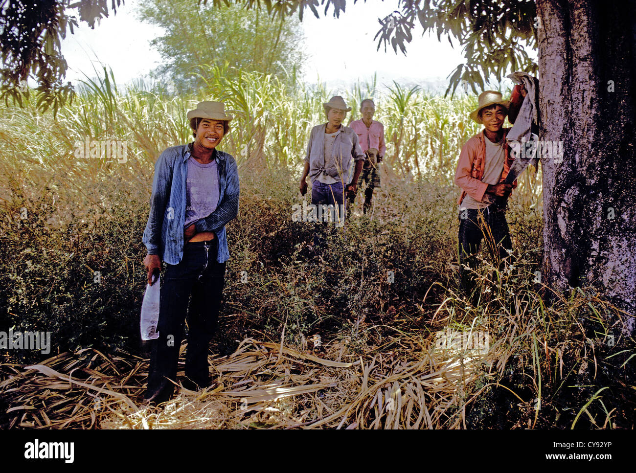 Fillipino sugar cane workers take a break in the shade from the back breaking of harvesting the crop Luzon Phillippines - Stock Image