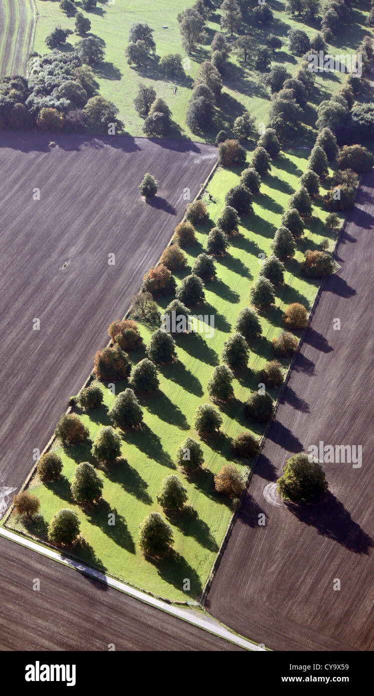 aerial view of an avenue of trees - Stock Image