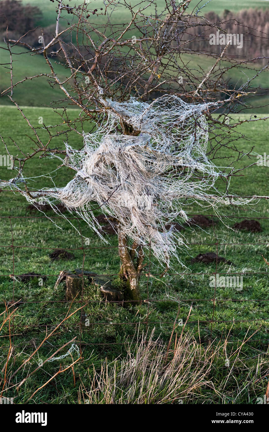 Discarded nylon fencing netting caught in a hawthorn bush, UK. - Stock Image