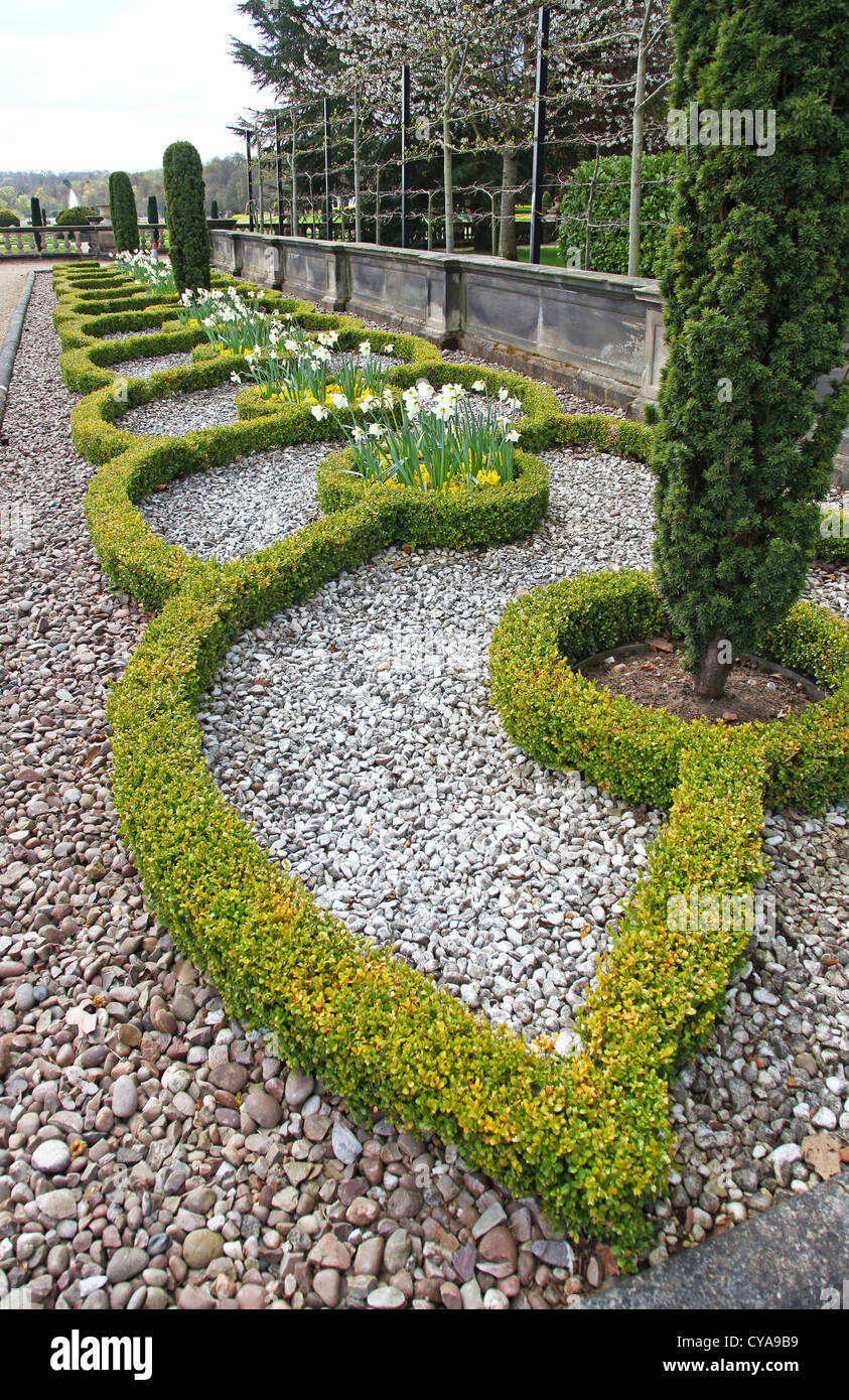 Box hedging in the formal Italianate gardens at Trentham Gardens Stoke-on-Trent Staffordshire England UK - Stock Image