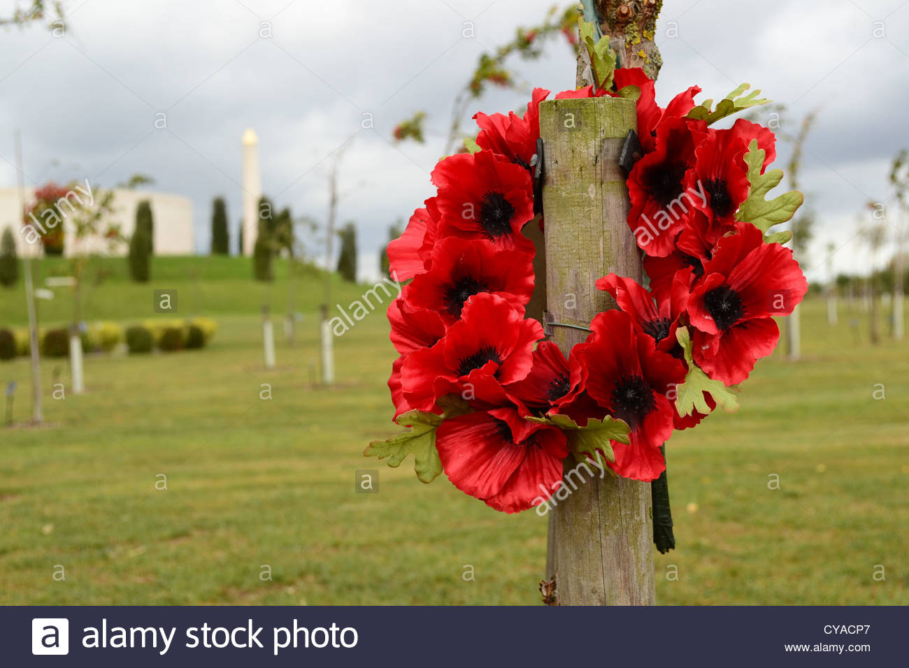 Remembrance poppy wreath on a soldier's memorial tree at the National Memorial Arboretum in Staffordshire, England. - Stock Image