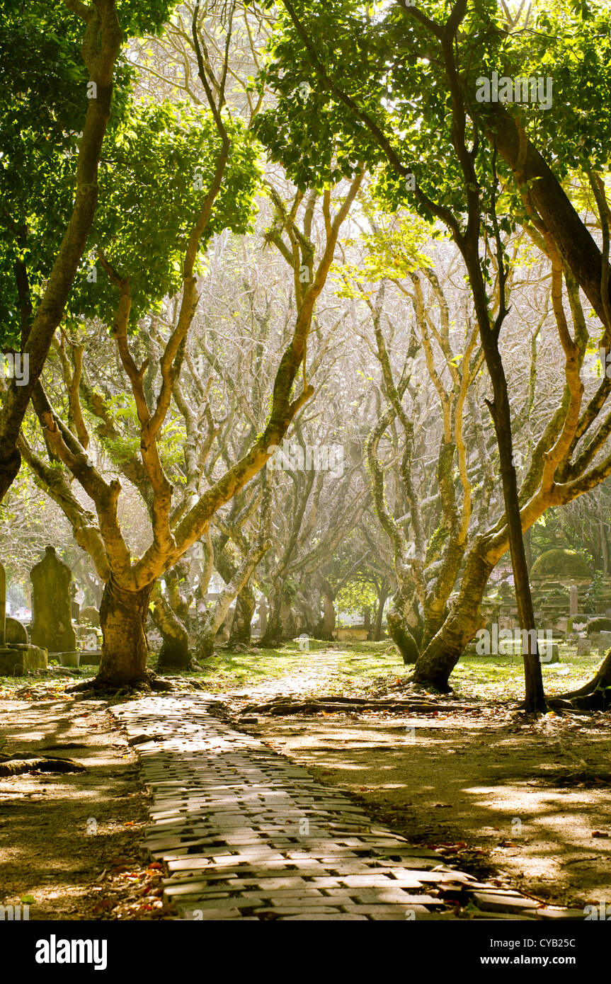graveyard in day time, sun shines through the tree branches. - Stock Image