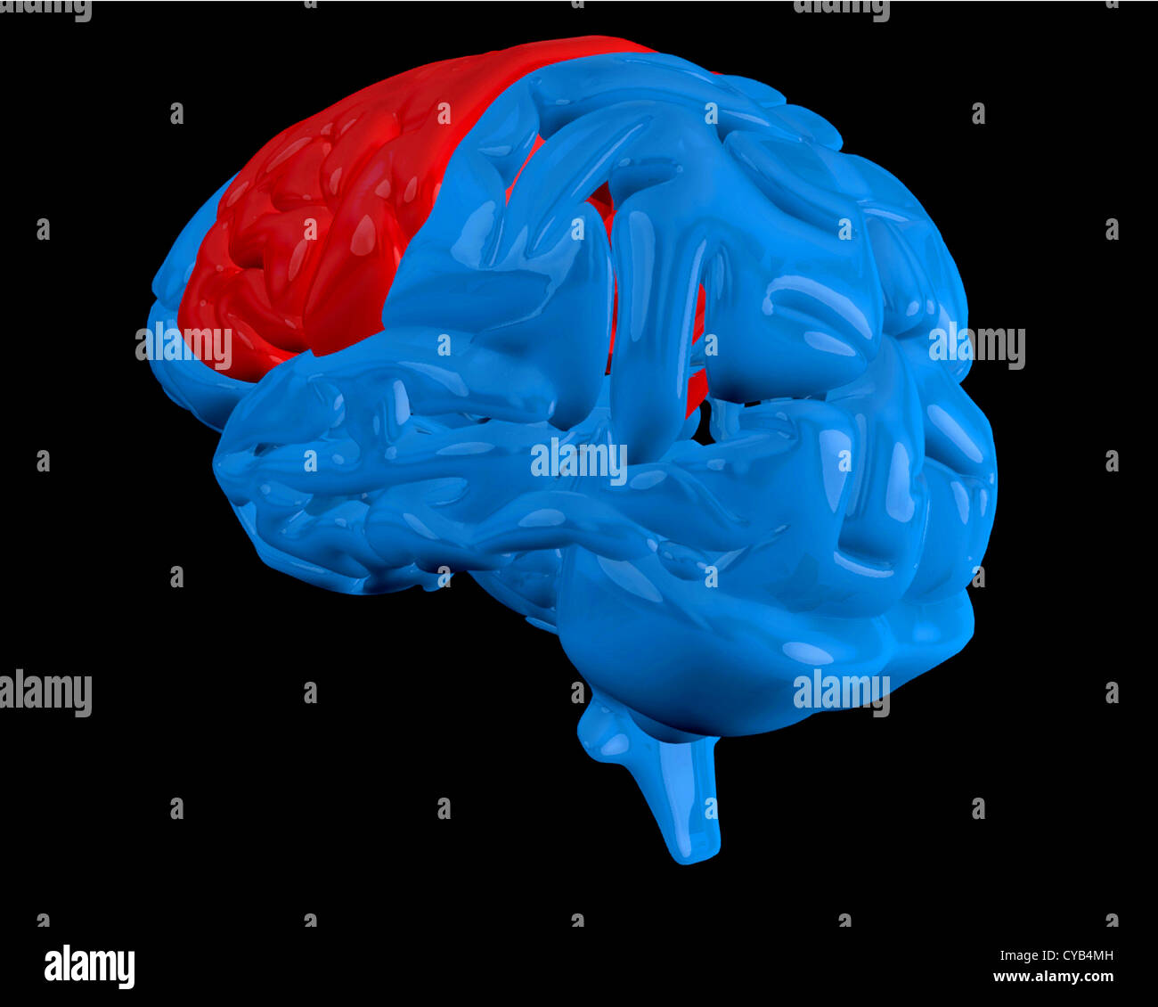 Blue brain with highlighted cerebrum - Stock Image