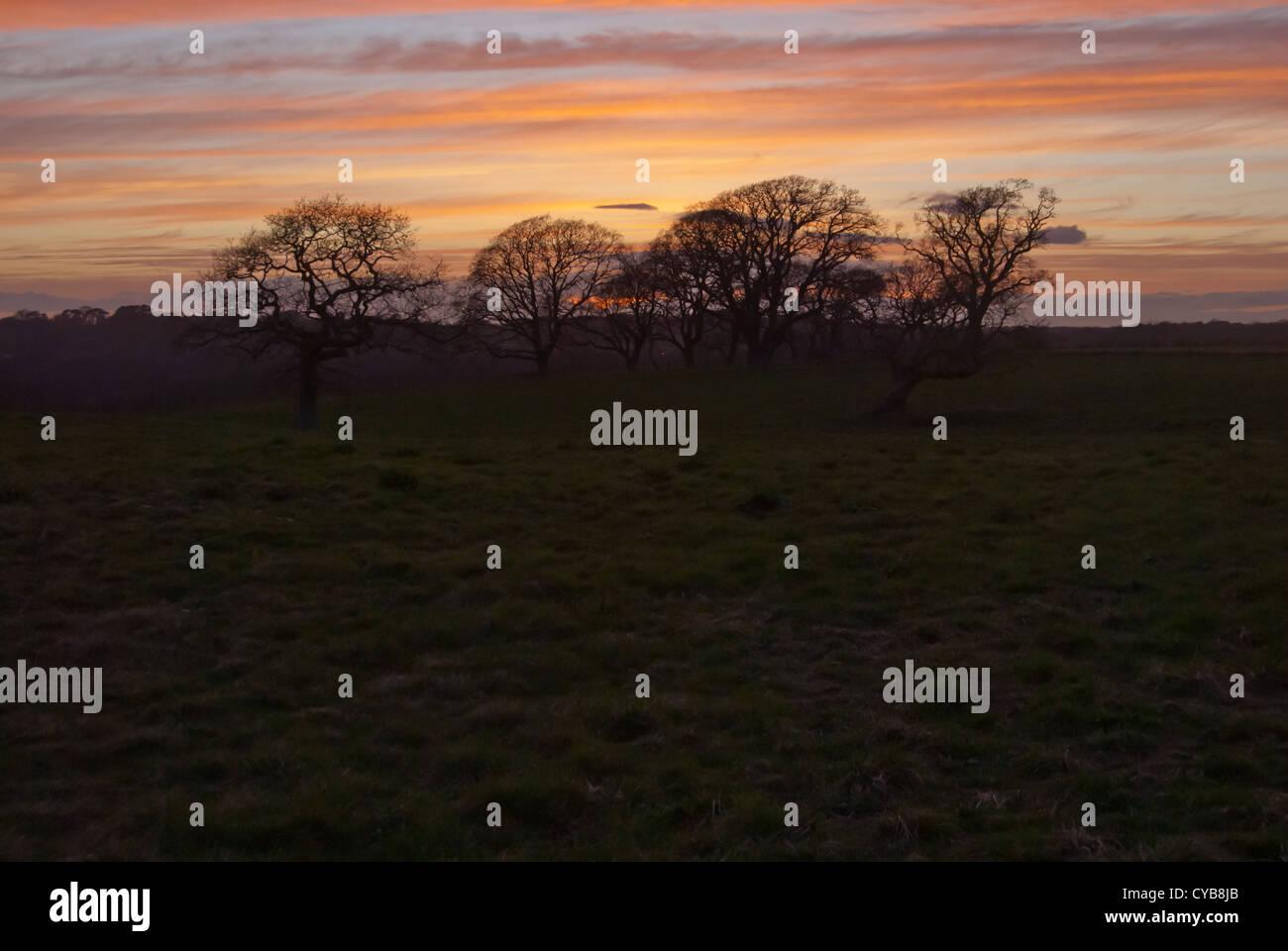 oak trees at sunset - Stock Image