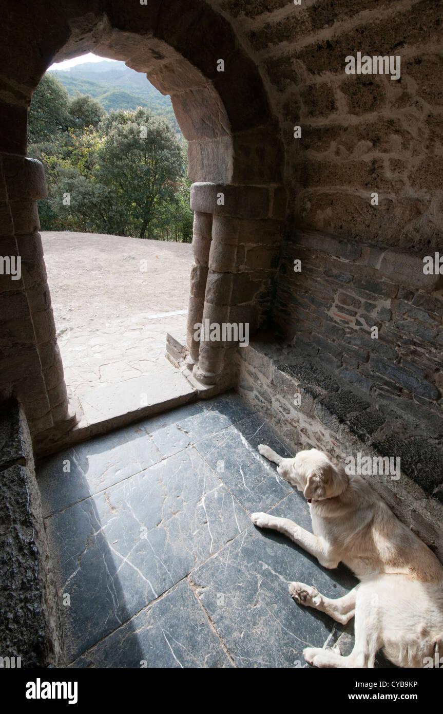 A dog lies inside an old church, Santa Cristina de Lena (Spain). - Stock Image