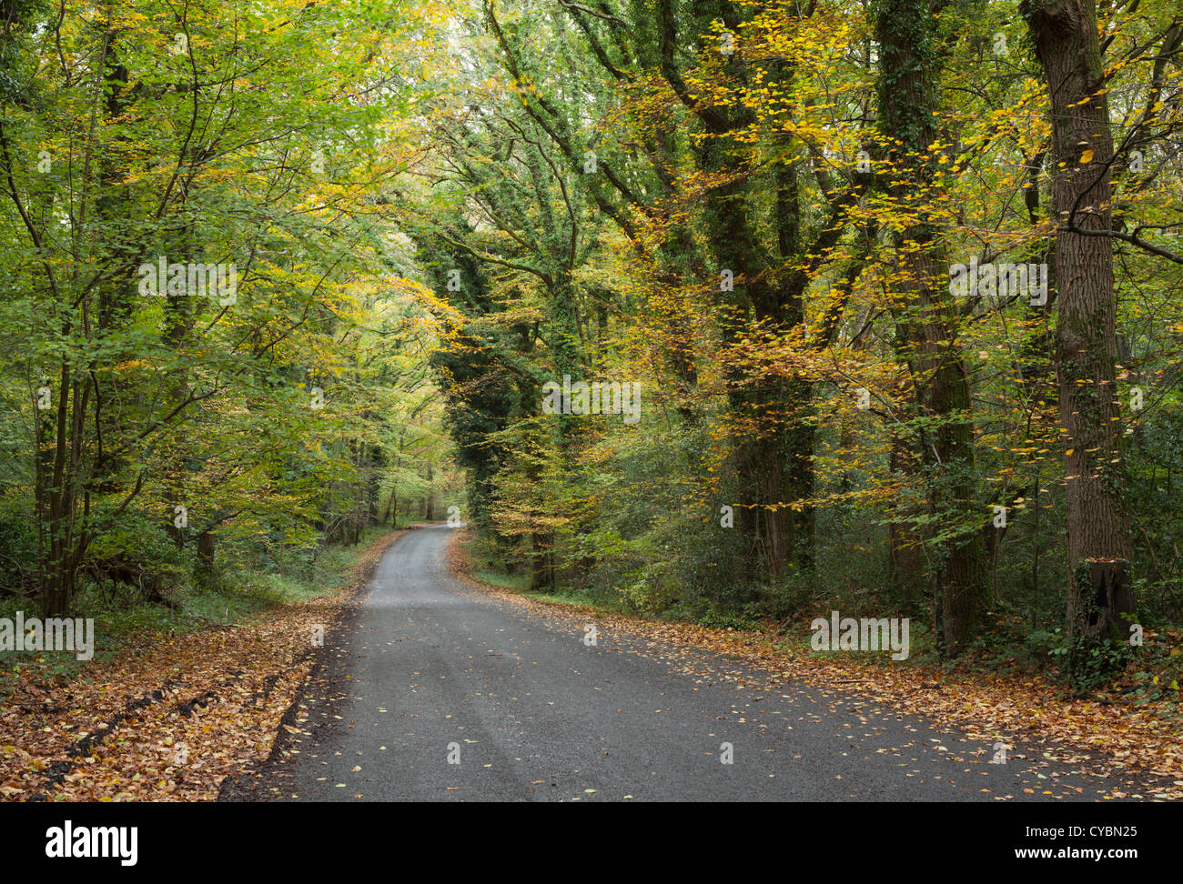 The Mens woodland near Petworth in West Sussex - Stock Image