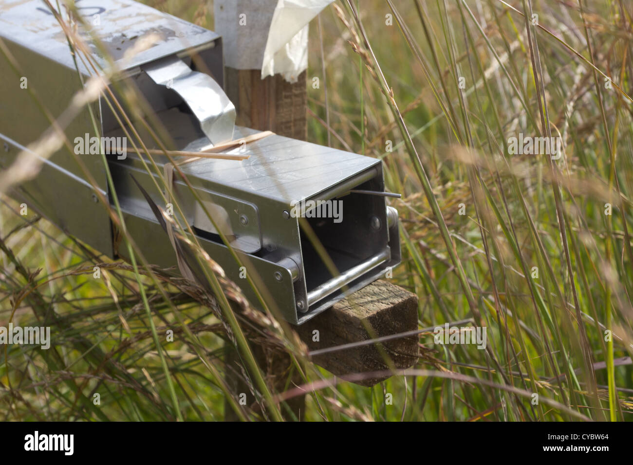 Rodent survey trap in grassland. Surrey, UK. - Stock Image