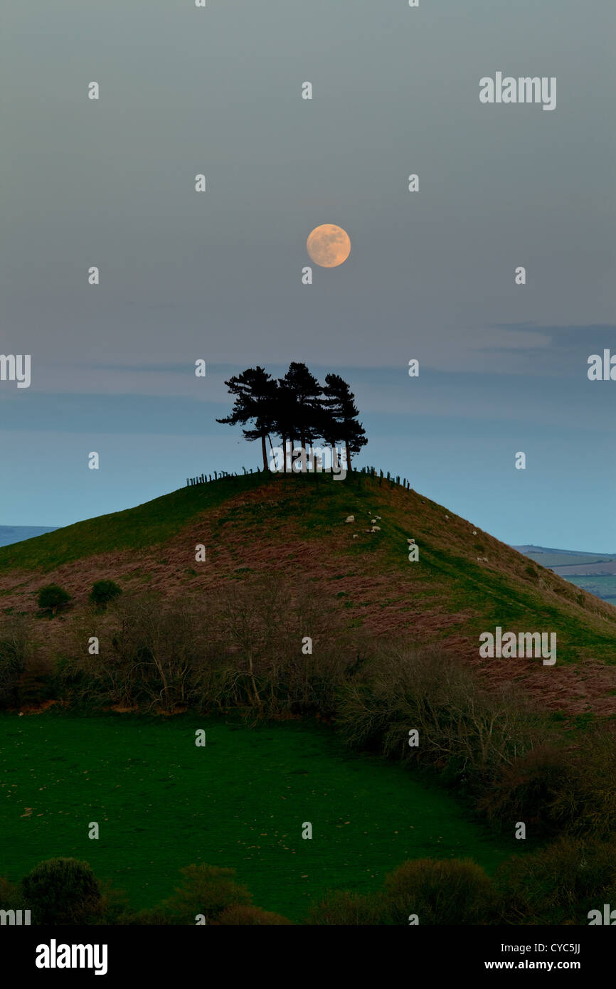 The full moon rising over Caledonian pine  trees on Colmer's Hill. The hill is a distinctive local landmark - Stock Image