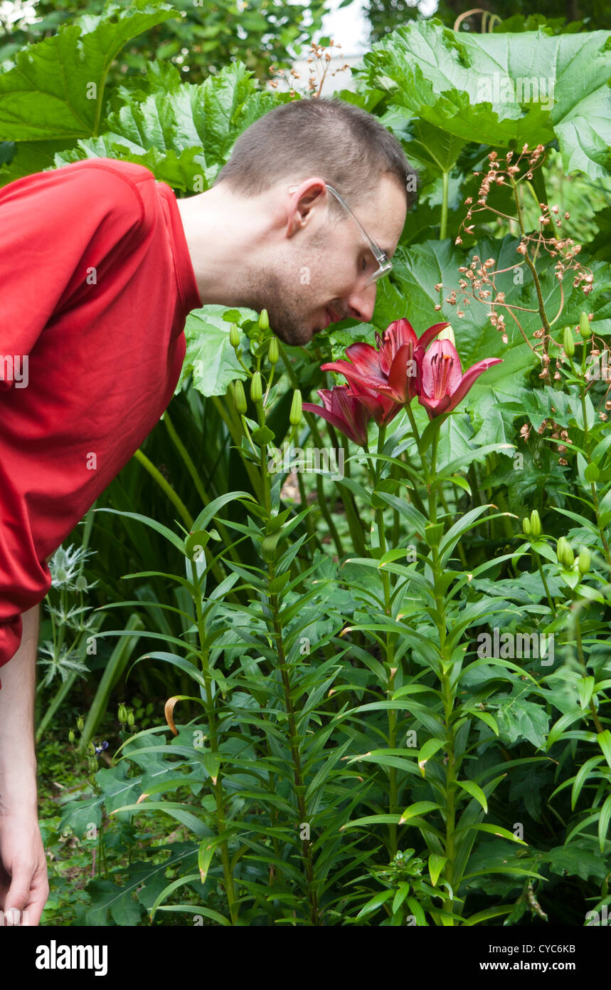 Man in his 20's standing in a garden and bending over to smell a lily - Stock Image