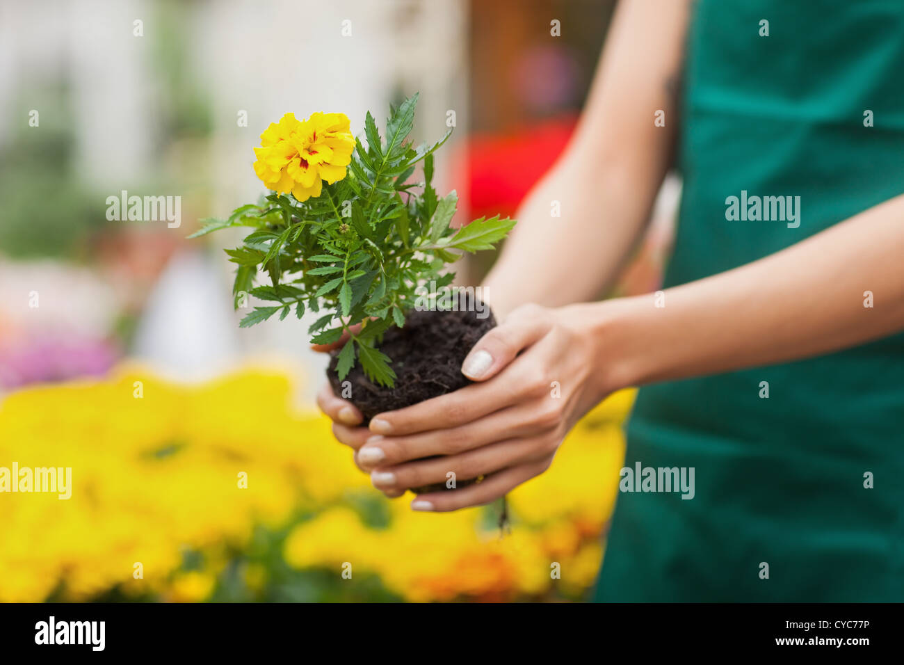 Grow Assistant Stock Photos & Grow Assistant Stock Images