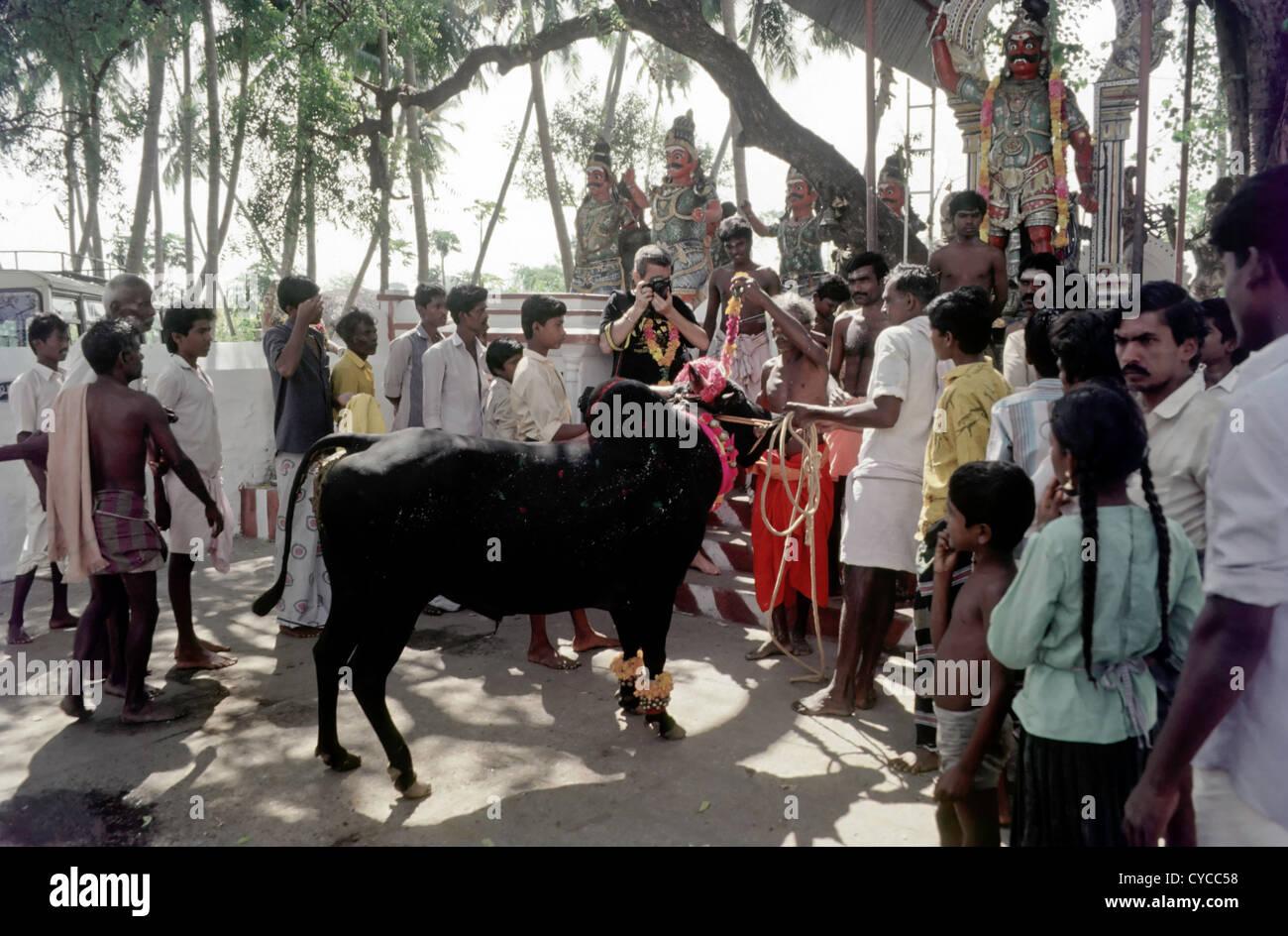 Bull owners worshipping  the Guardian Deity at Alanganallur near Madurai,Tamil Nadu,India. - Stock Image