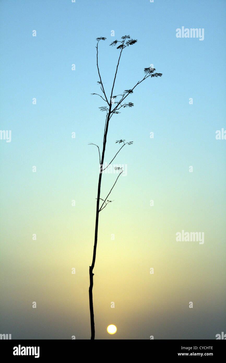 sunrise,sunset,blade of grass - Stock Image
