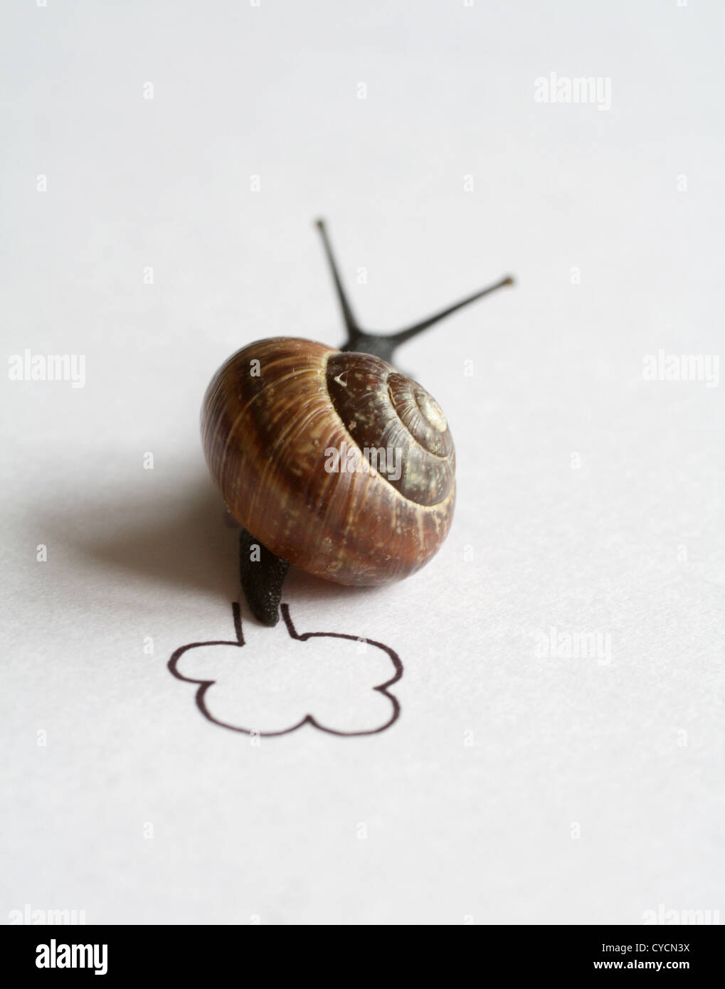 snail,snail pace,snail race Stock Photo