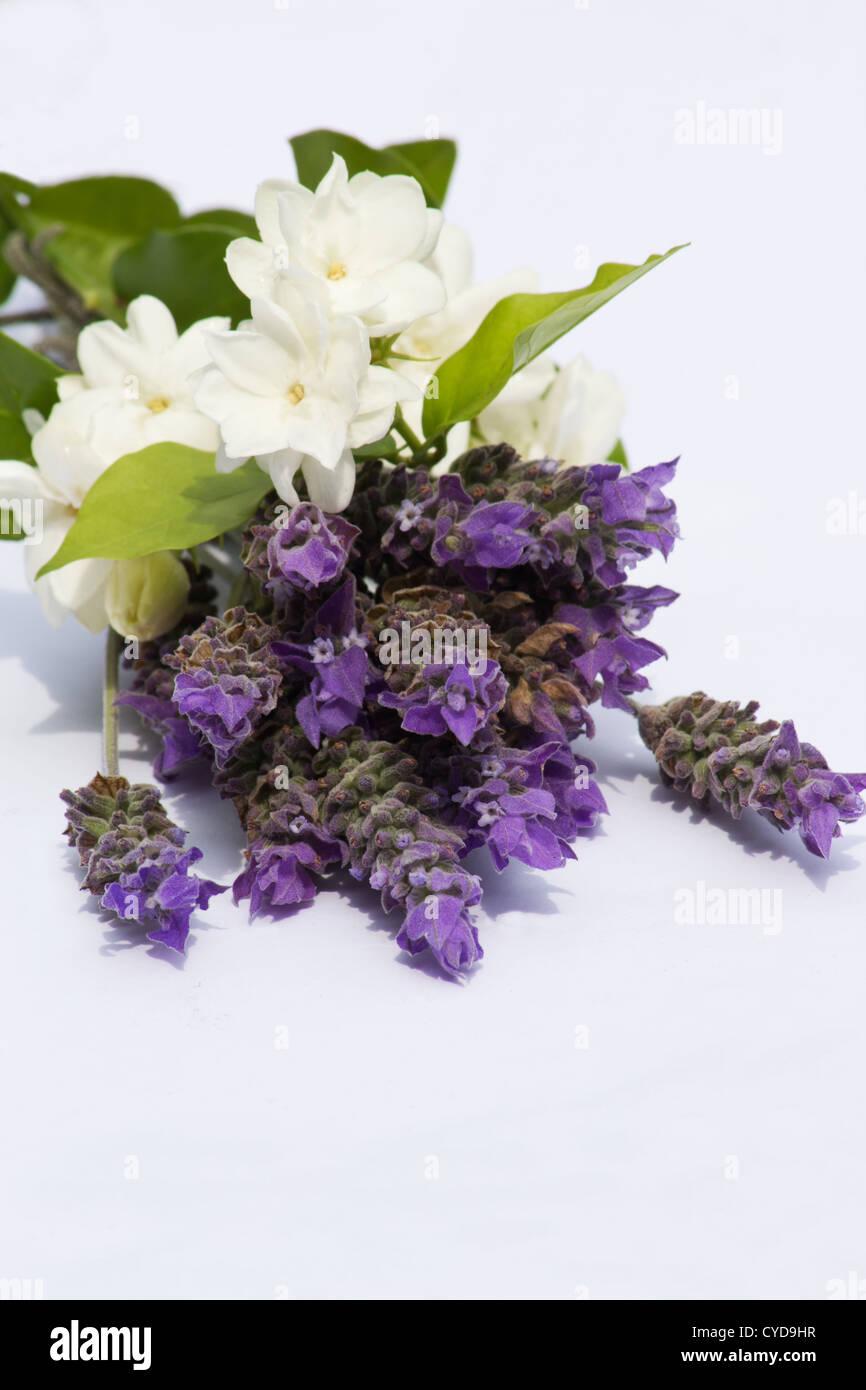 Purple jasmine stock photos purple jasmine stock images alamy cuttings of lavender and jasmine on white background stock image izmirmasajfo