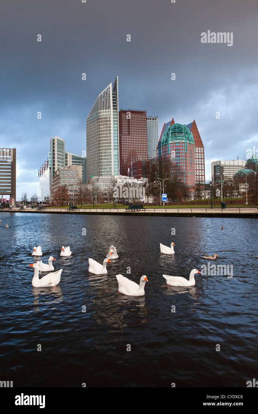 The Netherlands, Den Haag, The Hague, View of modern architecture. Mainly ministries. Foreground tame geese. - Stock Image