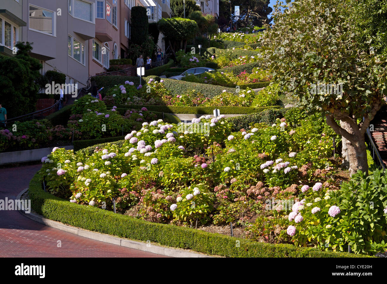 View down Lombard Street, famous for its steep, one-block section consisting of eight tight hairpin turns (switchbacks) - Stock Image