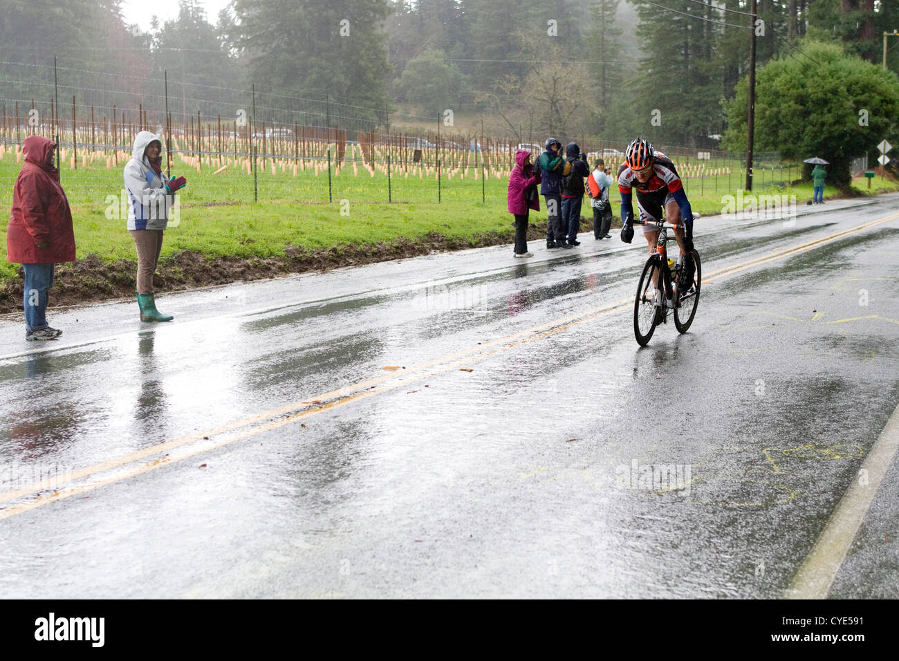 A lone cyclist charges up a hill during the AMGEN Tour of California. - Stock Image