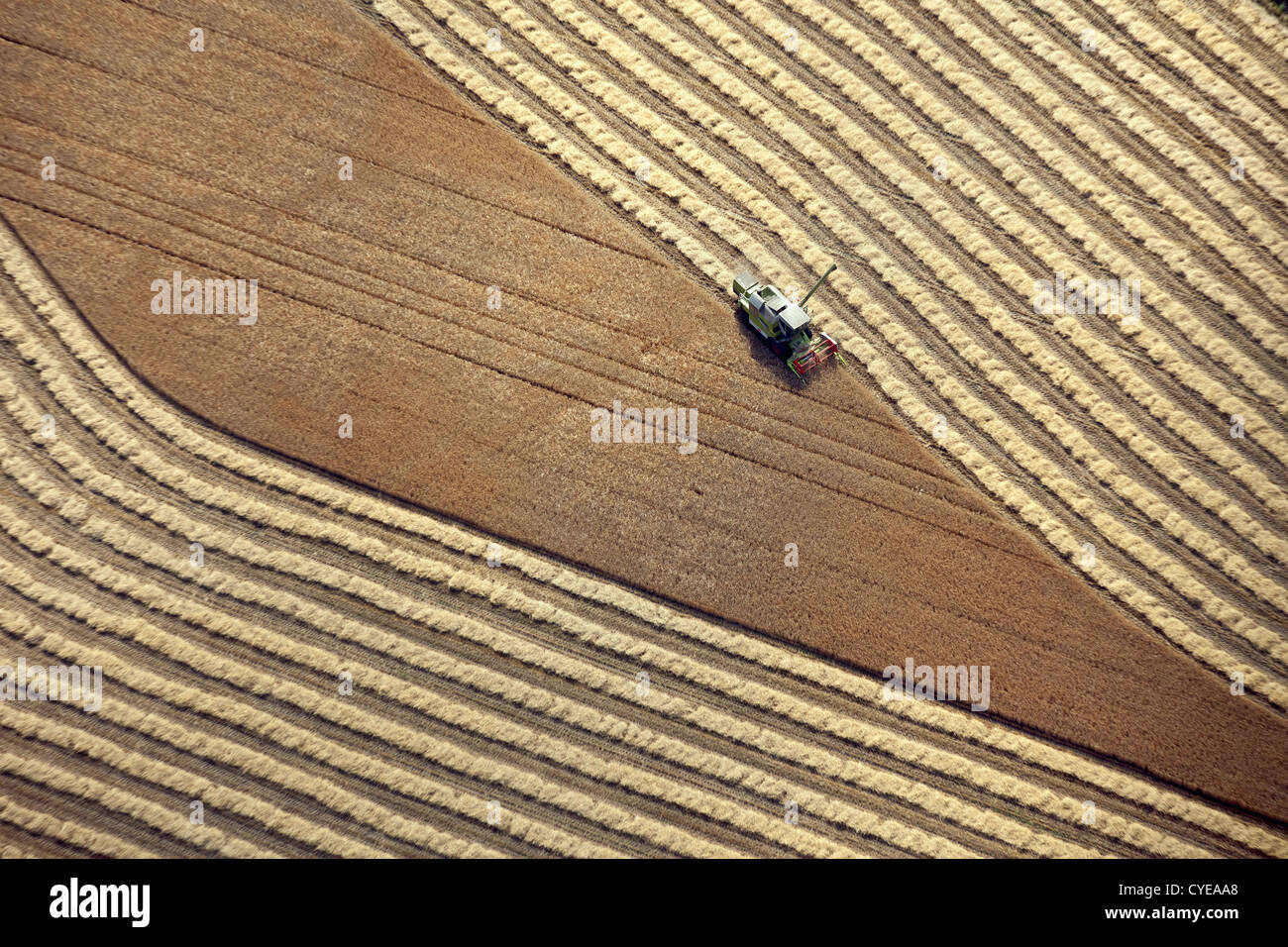 The Netherlands, Donderen, Combine harvester harvesting wheat field. Aerial. Stock Photo